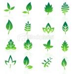leaf07
